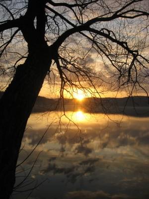 x Otsego Lake Sunrise Tree