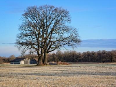 tree-1203624_640